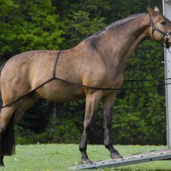 POPRUHY pro nakládání koně